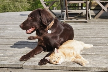 A cute dog and cute cat enjoy the spring sunshine.