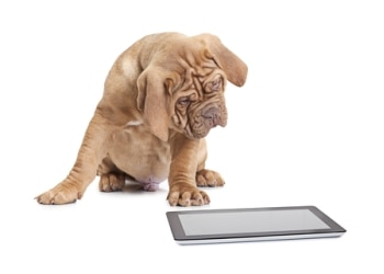 A dog with dog insurance stares at a tablet contemplating chewing it.