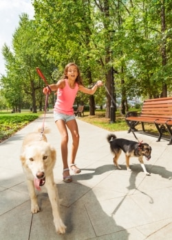 Two dogs with Pets Best Pet Insurance pull on their leashes. The dog walker nearly stumbles from them yanking on their leashes.