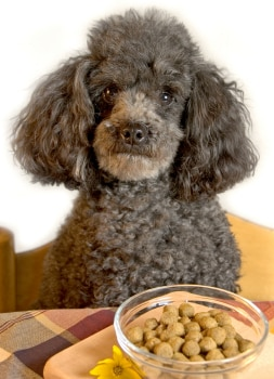 Picky dog refuses plain dog food.