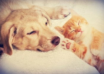 Why You Should Get Pet Health Insurance While Your Pets Are Still Young