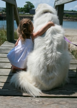 A little girl and Great Pyrenees dog sit on a dock together.