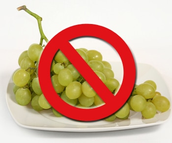 Grapes and raisins are toxic to dogs.