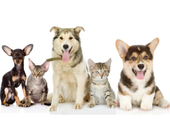 Pet insurance premiums can depend on the dog or cat's age, breed, and where they live.