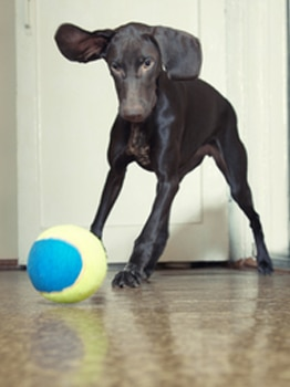 simmer down! tips for calming a hyperactive dog