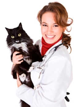 A veterinary technician holding a black and white cat.