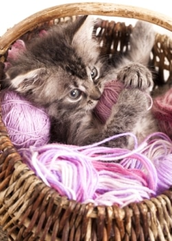 A kitty plays in a basket of yarn.