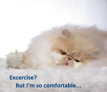 Indoor cats need extra initiative to exercise.