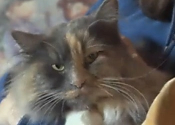 Mazy May, a cat that was lost for 16 Months in the Oregon wilderness amazingly survived and was recently reunited with her family.