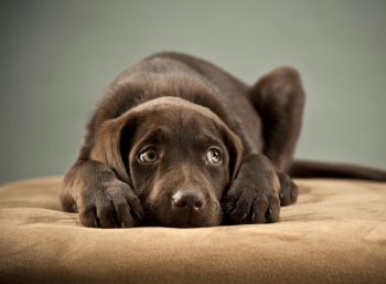 This pet insurance dog wants you to know how he's feeling.