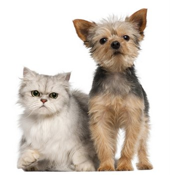A dog and a cat with pet health insurance sit beside each other.