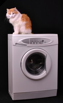 A cat with pet health insurance sits on top of a washing machine.