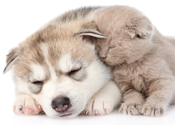 Common puppy and kitten health problems pet owners need to know.