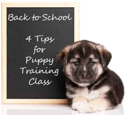 A puppy lays next to a chalkboard sign that reads, Back to School - 4 Tips for Puppy Training Class.