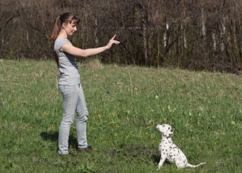 lady training a puppy to sit