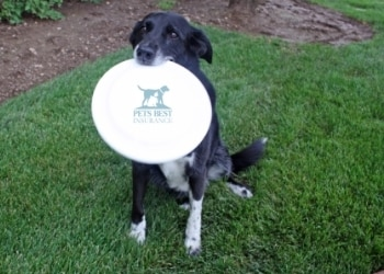 a black dog sits in the grass with a Pets Best Insurance frisbee in her mouth.