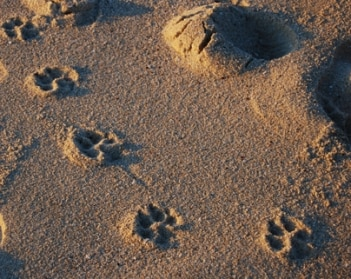memorialize your pet with their paw print.
