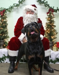 A rottweiler poses with Santa at a Pets Best pet insurance event.
