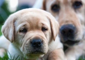 How to select the best pet insurance plan for your dog or cat.