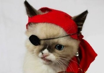 A rescued kitten who lost an eye and has a disfigured jaw wears a pirate eye patch and head scarf.