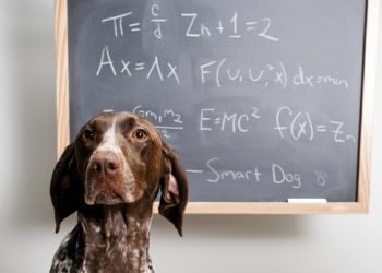 A Pets Best Pet Insurance protected dog takes an IQ test to find out how smart he is.