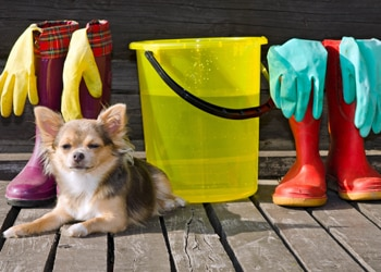 A long haired Chihuahua sits in a bucket of cleaning supplies.