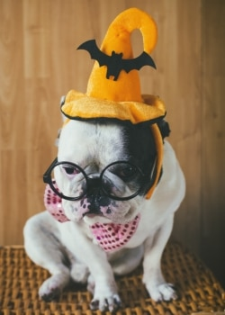 "Tips for selecting a Halloween costume for your dog or cat."" class="