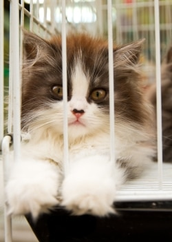 A kitten waits in a crate after traveling to the veterinarian.