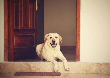 Factors to consider when hiring a pet sitter that'll stay at your home.