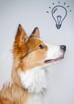 Train your dog to turn the lights on or off.