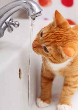 Why cats hate water, and why some cats actually like it!
