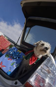 A dog with pet insurance sits in a packed car.