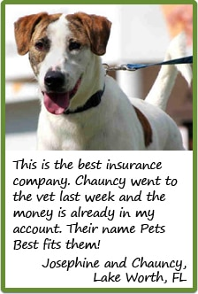 Testimonial photo of an insured dog.
