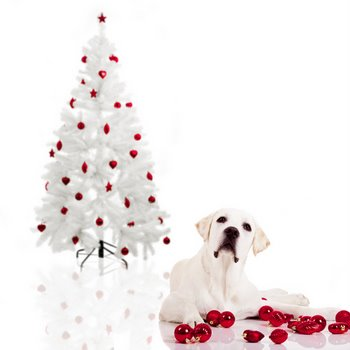 A dogs sits next to a white Christmas tree.