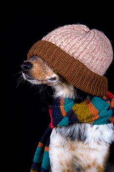 A small dog is bundled up for the winter.