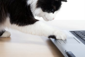 A black and white cat uses a computer.