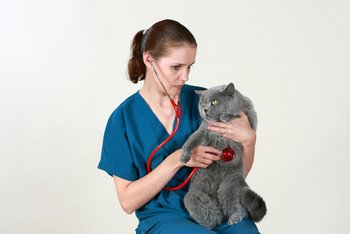 A cat is tended to by a veterinarian.