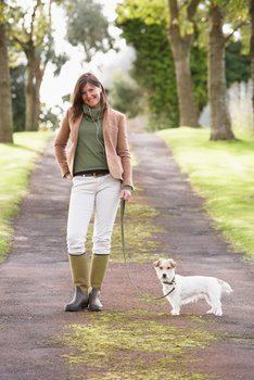 A dog with pet insurance is safe outdoors on a leash.