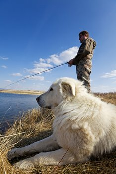 A dog sits beside his master while he fishes.