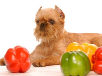 A dog sits next to bright colored veggies.