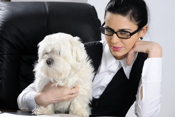 A business woman sits in her office with a white dog.