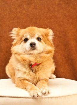 A dog with pet insurance looks astute for the camera.