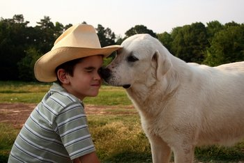 A dog with Texas pet insurance licks a child.