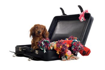 A dog sits in a suitcase preparing for a trip.