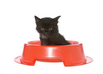 A tiny kitten sits in a large food dish.
