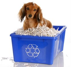 A puppy sits in a recycling bin.