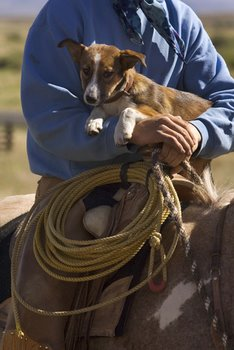 A dog with Texas pet insurance rides on a horse with his owner.