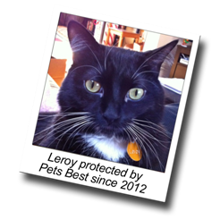 Leroy has had cat health insurance from Pets Best since 2012