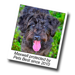 Maxwell has dog insurance and has been protected by Pets Best since 2010