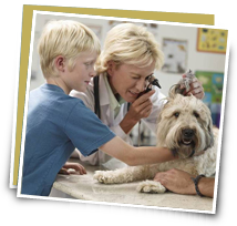 Pet insurance image of a veterinarian
